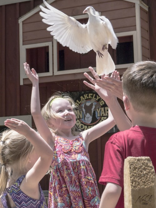 Kids release pigeons during the Barnyard Bonanza show (Photo: Dr. ChengLun Na)