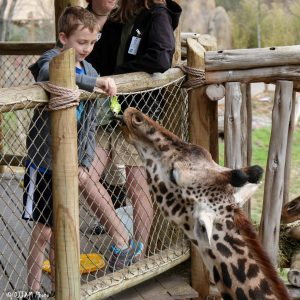 Feed a giraffe! (Photo: DJJAM)