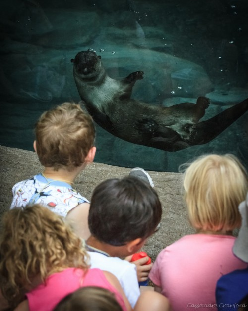 Visitors watch the river otters play. (Photo: Cassandre Crawford)