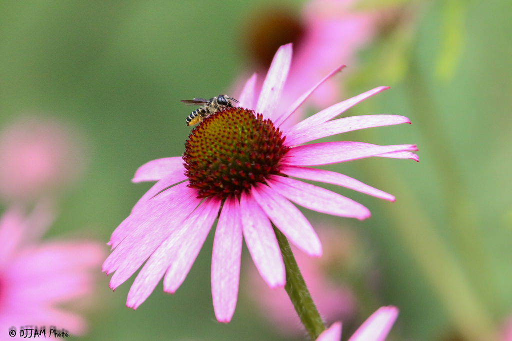 Pollination in progress! (Photo: DJJAM)
