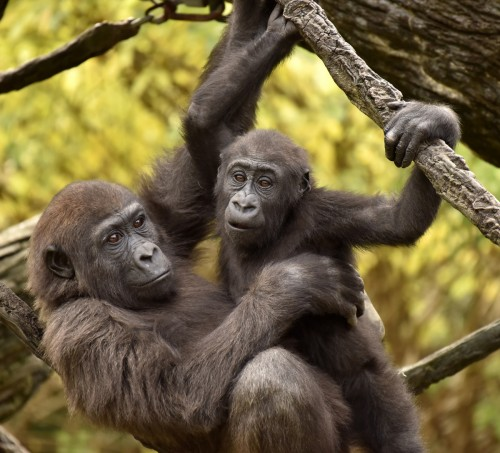 Gladys hangs with her bestie, Mona (Photo: Jeff McCurry)