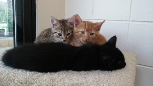 Joanie (grey), Bernard (orange) & Batman (black)