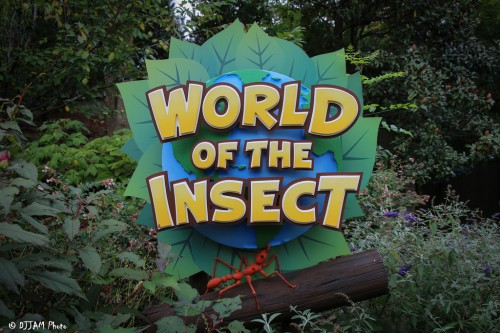 World of the Insect (Photo: DJJAM)