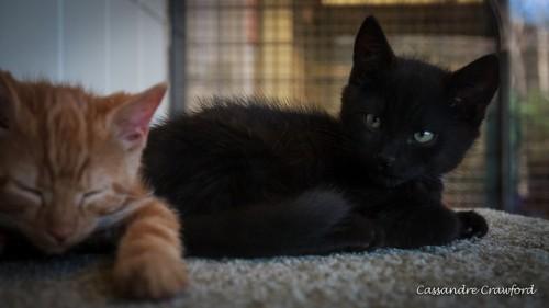 Bernard (orange) & Batman (black)