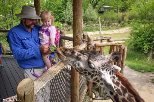 Everyone loves to feed the giraffes! (Photo: DJJAM)