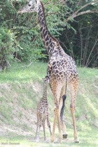 Cece towers over baby Cora last summer. (Photo: Mark Dumont)