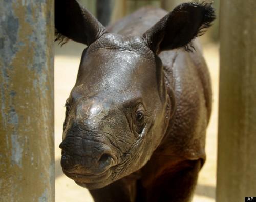 Alabama Bunker Standoff Rhino