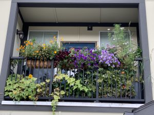 Balcony pollinator garden (Photo: Amanda Wischmeyer)