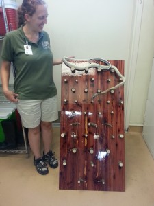 "Summer intern Amanda with her enrichment project, the ""Snake Slalom."""