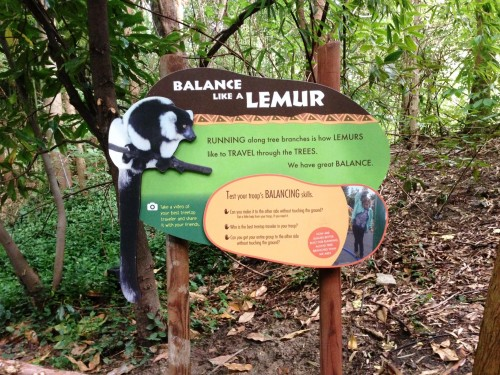 Balance like a Lemur sign