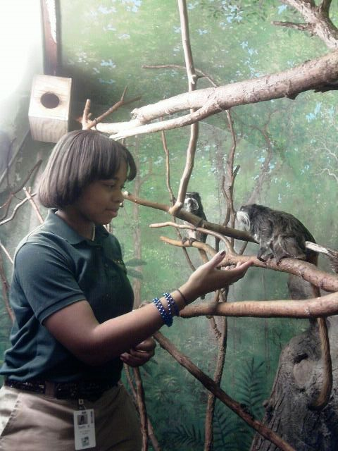 Here I'm working with the emperor tamarins in the World of the Insect building.