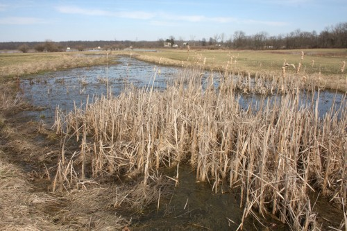 Wetlands in restoration at EcOhio Farm