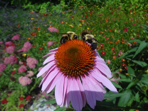Bees in the #ZooGarden