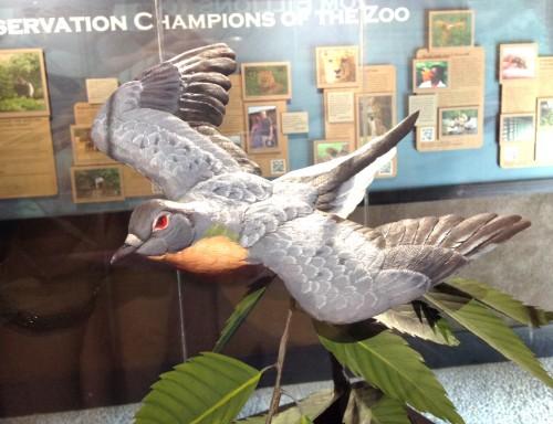 Passenger pigeon sculpture by Gary Denzler