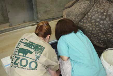 Dr. Monica Stoops (CREW) and Dr. Anneke Moresco (Denver Zoo) discuss results of an ultrasound exam conducted on a sedated female Indian rhino.