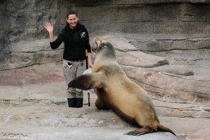 An operant conditioning session with Duke, the sea lion (Photo: DJJAM)