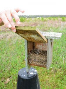 Eastern Bluebird Nest Box (Photo: Shasta Bray)