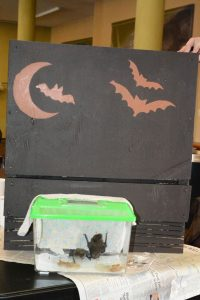 Finished bat house with big brown bats (Photo: Shasta Bray)