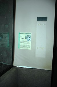 Fishing cat exhibit wall