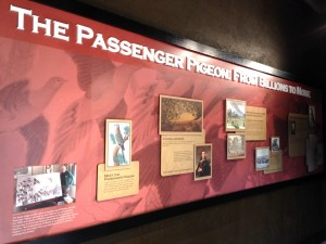 The Passenger Pigeon: From Billions to None