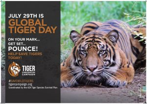 Global Tiger Day poster