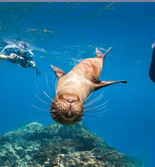 Snorkel with Galapagos sea lions? I'm in! (Photo: Michael S Nolan)