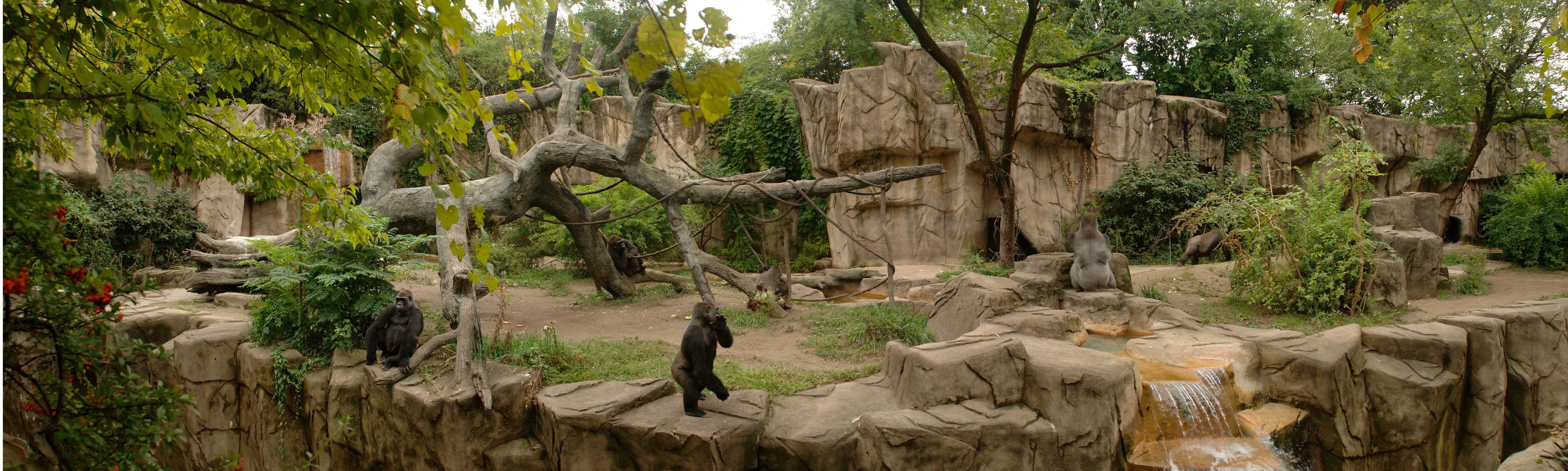 Samantha  The Grand Old Lady of the Cincinnati Zoo   Cincinnati Zoo
