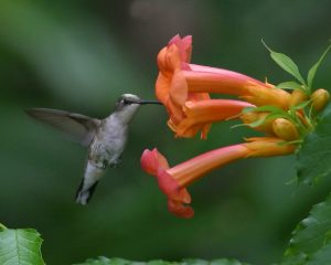 I grew up loving many of the wild animals found in my backyard, such as hummingbirds. (Photo: Brian Jorg)