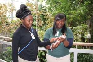 Showing one of my classmates a blue-tongued skink