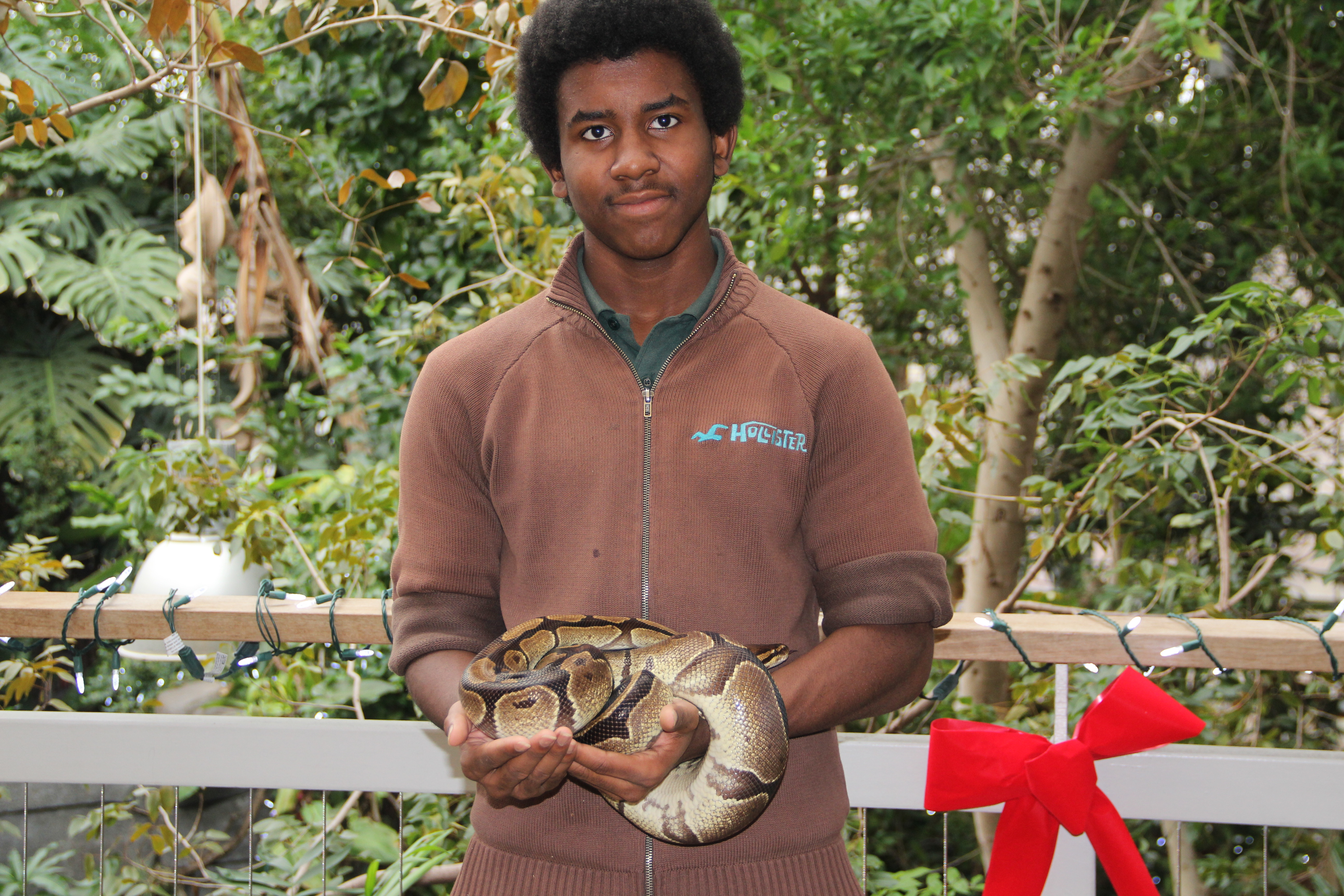 Here I am handling a ball python