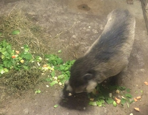 Warty Pigs get a bedtime snack.