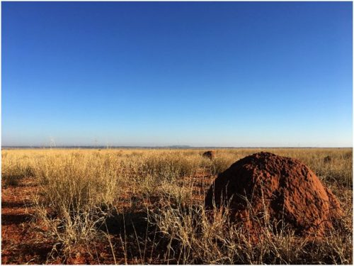 An open area of Kalahari landscape with a termite mound in the foreground (Photo: Anneke Moresco)