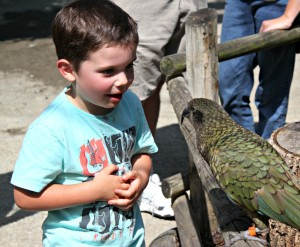 A young guest meets a kea up close.