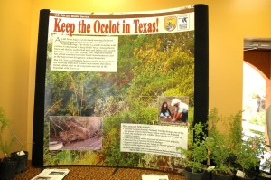 Keep the Ocelot in Texas display