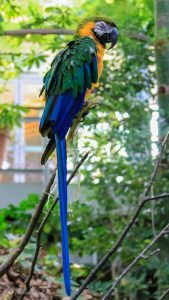 Leroy. a blue and gold macaw at the Zoo (Photo: Cassandre Crawford)