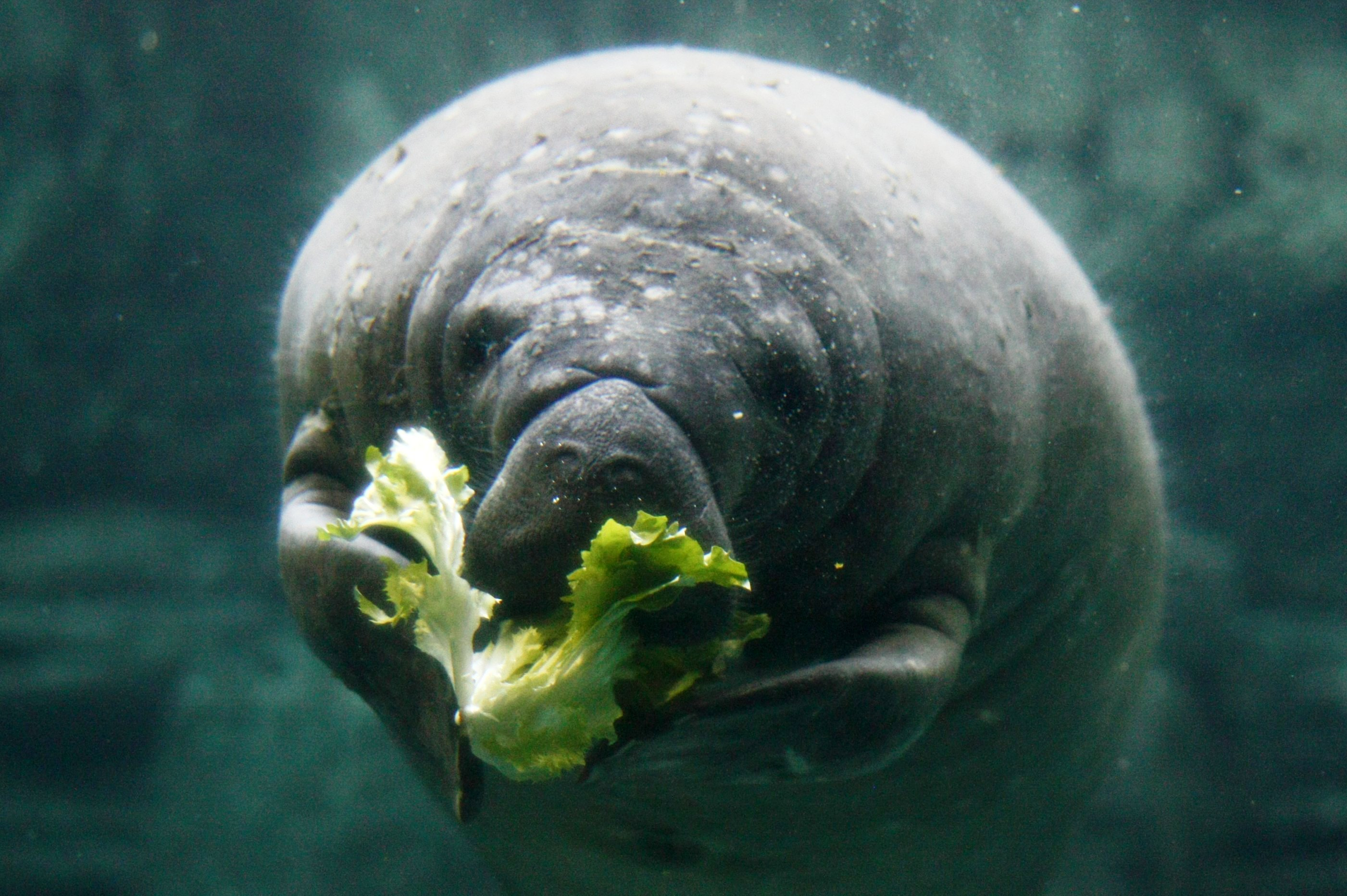 five ways the zoo can get your child excited about healthy eating