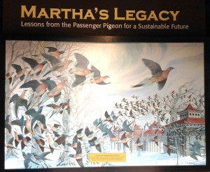 Entry wall featuring a reproduction of John Ruthven's Martha, the Last Passenger Pigeon