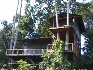 Observation tower at Mbeli Bai