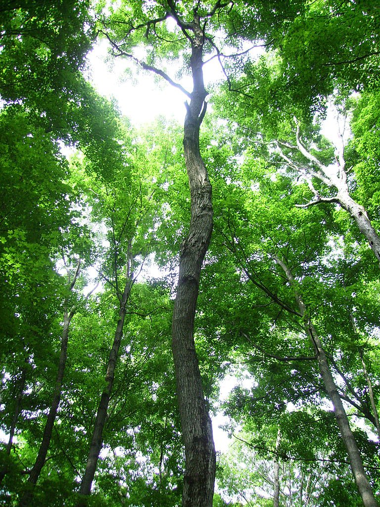 Celebrate National Arbor Day By Planting A Tree Through