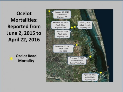Ocelot Mortalities Map (U.S. Fish and Wildlife Service)