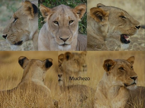 ID photos for Muchezo (Photo: Rebuilding the Pride)