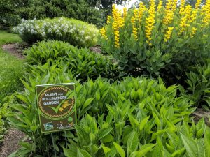 Pollinator garden (Photo: Scott Beuerlein)