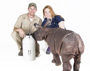 Rhino calf Monica,  Lead  Rhino Keeper Joe Hauser, and CREW Reproductive Physiologist Dr. Monica Stoops with Cry