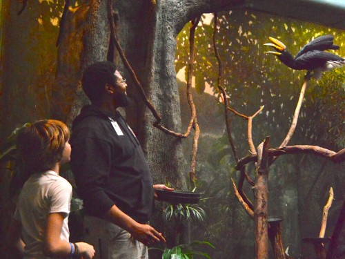 Today, Rickey works in aviculture with birds, including the rhinoceros hornbill.