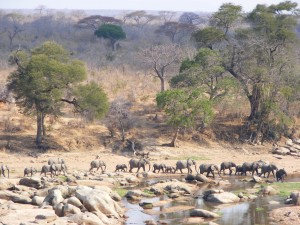 Ruaha landscape (Photo: Marcus Adames)