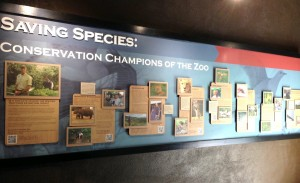Saving Species: Conservation Champions of the Zoo