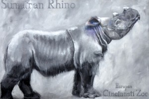 Another raffle item includes this Sumatran rhino 'Harapan' print by artist Ali Armstrong