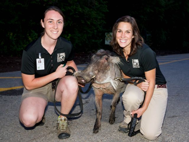 Shelly and fellow keeper, Susie, with Walter the warthog