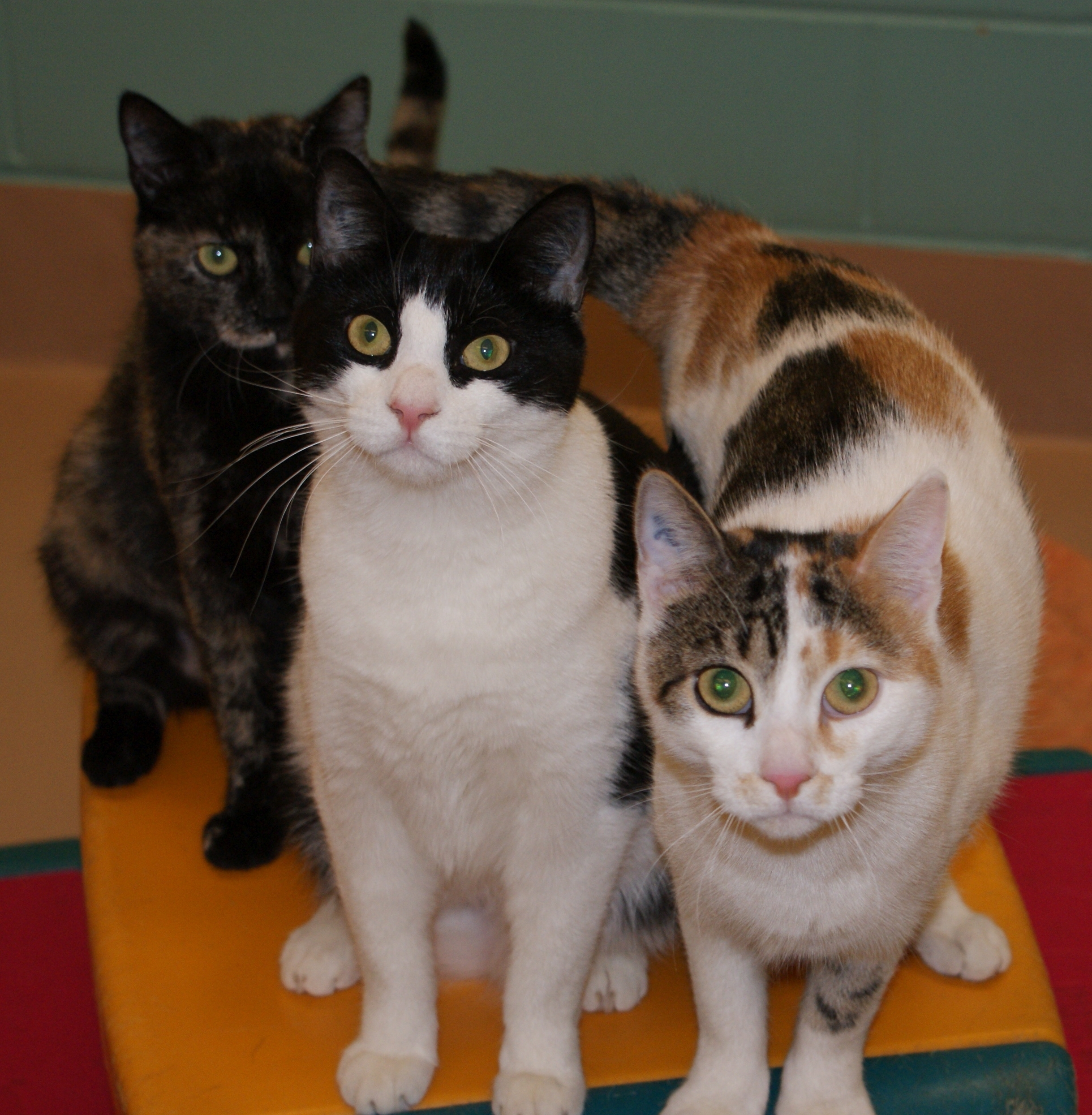 Three of the CREW cats - Taneshia, Beth and Paige