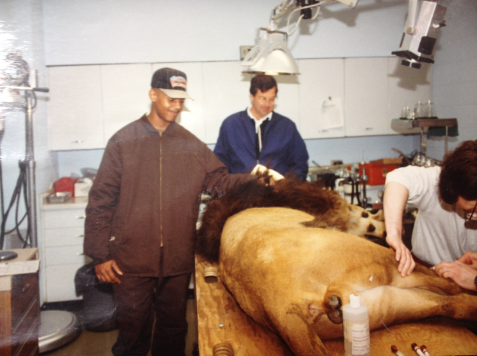Rickey Kinley as a Zoo Academy student assisting with a procedure on a lion.